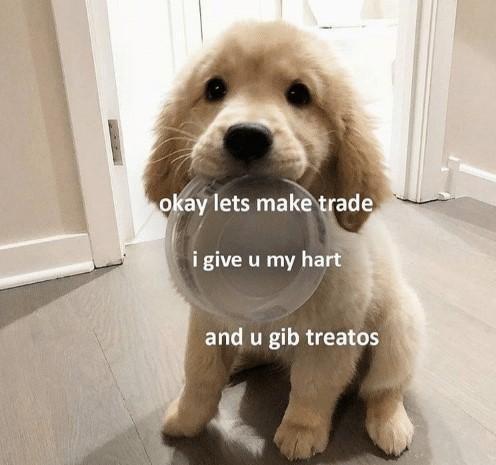 dog asking for treat