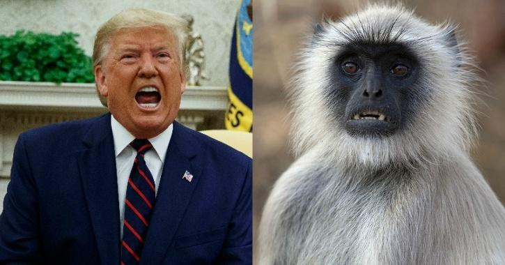5 Langur Monkeys Added to Donald Trump's Security Team For His Indian Trip