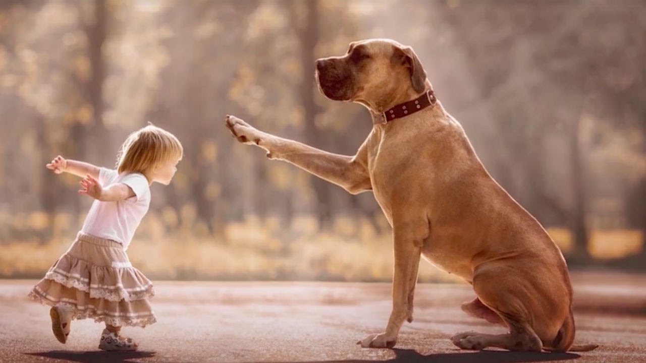 5 Surprising Benefits For Kids Who Grow Up With Dogs – AsViral