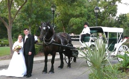 bride groom wedding horse carriage rental baton rouge clinton la louisiana