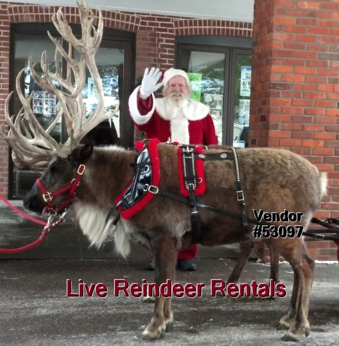 live reindeer rentals christmas santa events