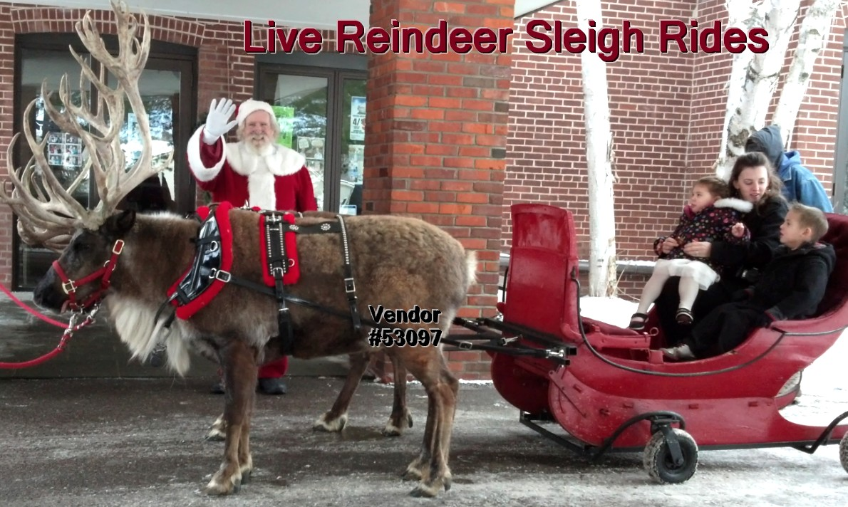 live reindeer sleigh rides