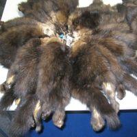 Sable pelt (or squirrel)