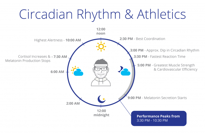 A summary of how the 24-hour circadian rhythm affects athletic performance at different time points.