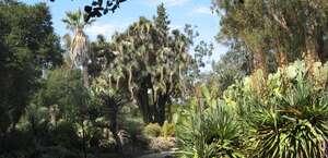 Arizona Cactus Garden
