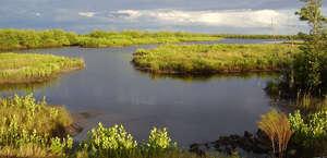 Charlotte Harbor Preserve