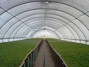 invernadero de cultivo