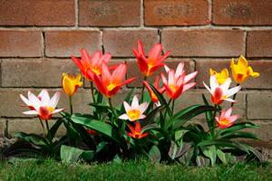 Una de las plantas colocadas por la empresa de jardinería