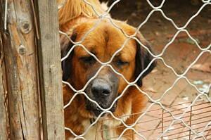 perro en una protectora