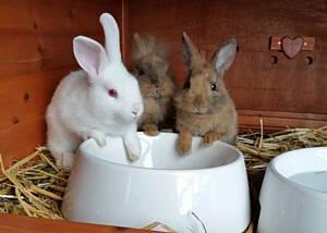 conejos en tienda de animales