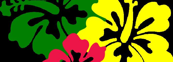 Hibiscus flowers hi