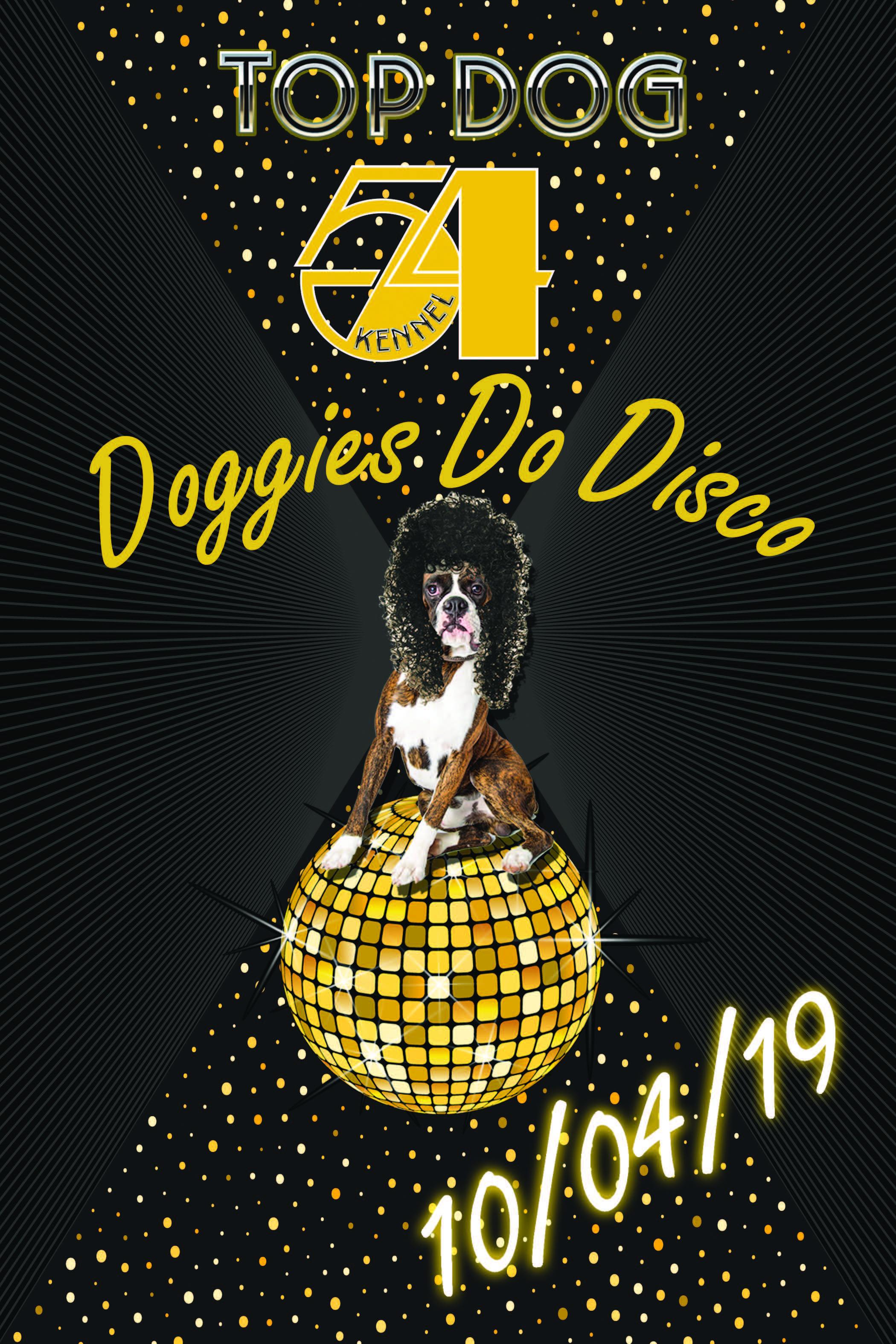 Td dog on disco ball b