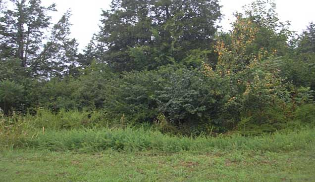 Online Auction: Commercial Land In Murfreesboro, TN