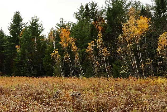 Online Auction: Timberland In LaGrange, ME