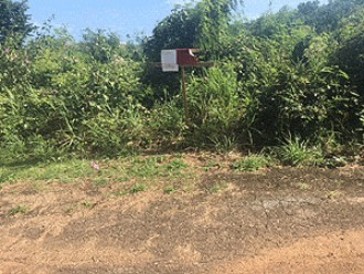 Online Auction: Residential Land In Fajardo, Puerto Rico