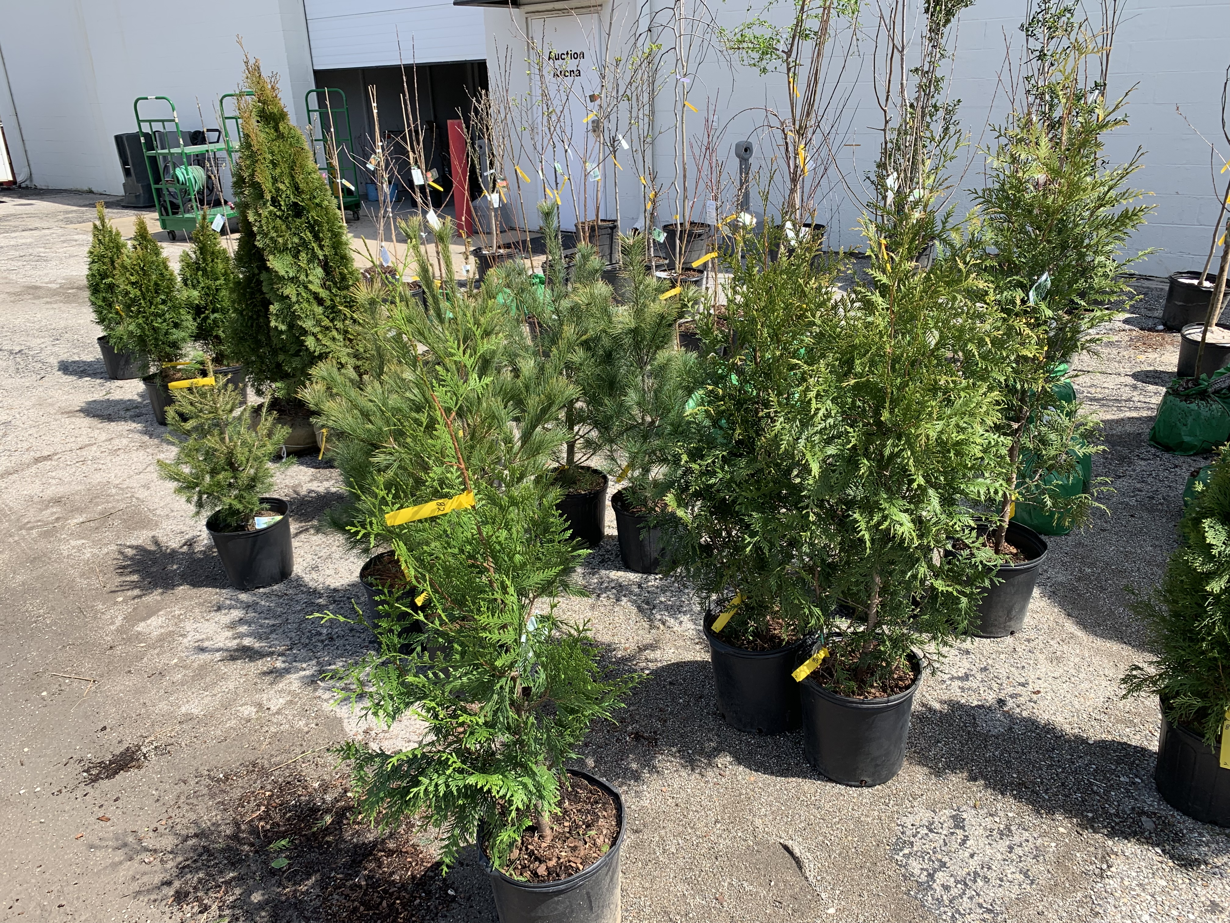 Nursery Flowers Trees Shrubs Online Auction In Indianapolis In