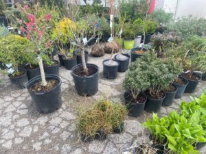 Plant & Landscaping Online Auction In Indianapolis, IN
