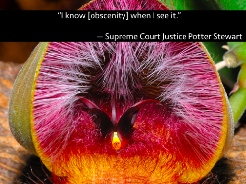 """Quote: """"I know [obscenity] when I see it"""" - Supreme Court Justice Potter Stewart"""