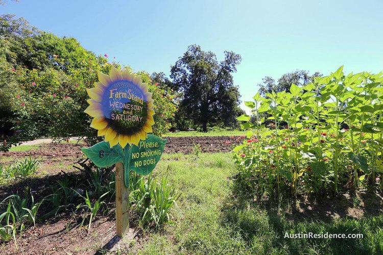 East Austin Boggy Creek Farm Stand