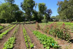 East Austin Springdale Farm Garden