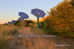 Mueller Solar Sunflowers