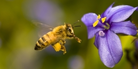 https://secure.avaaz.org/it/save_the_bees_us_pet_loc/?anQgsib