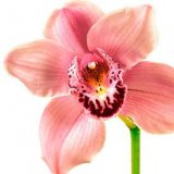 _orchid_plant303