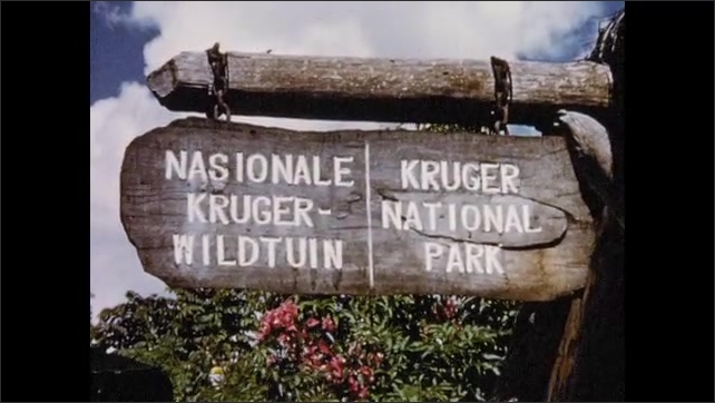 1950s: Pedestrian cross busy city street at intersection. Sign for Kruger National Park. Huts in village surrounded by trees.