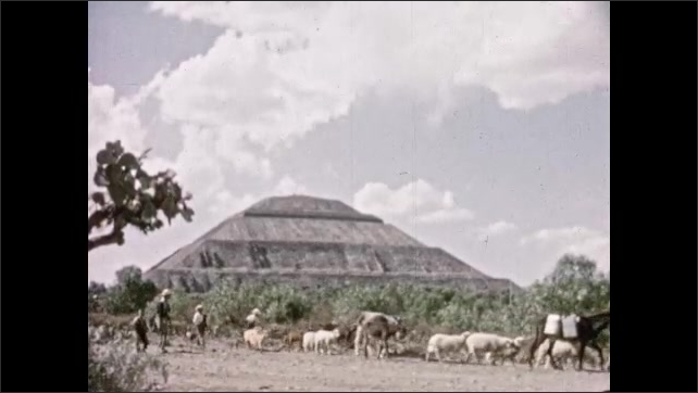 Mexico 1950s: Man and children guide donkeys, sheep, goats, and dogs down street in front of ancient pyramid.