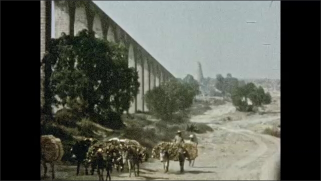 Mexico 1950s: Men guide donkeys with loads of wood on their backs down road, next to large aqueduct.