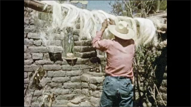 Mexico 1950s: Agave fibers dry on stick. Woman picks up coil of rope, walks away. Man adjusts fibers, separates them. Man holds fibers in hand, stretches them and walks backward.