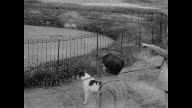 1930s: Swans stand by wire fence near pond. Children and dog look at swans and point. Swans stand by wire fence near pond