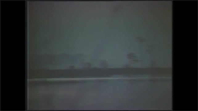 1970s: Panning shot of trees, coastline. Silhouette of swan on water. Swans on water. View of sunrise.