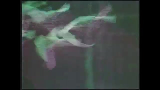 1970s: Low angle view of plane taking off. Flock of geese flying. Plane taking off.