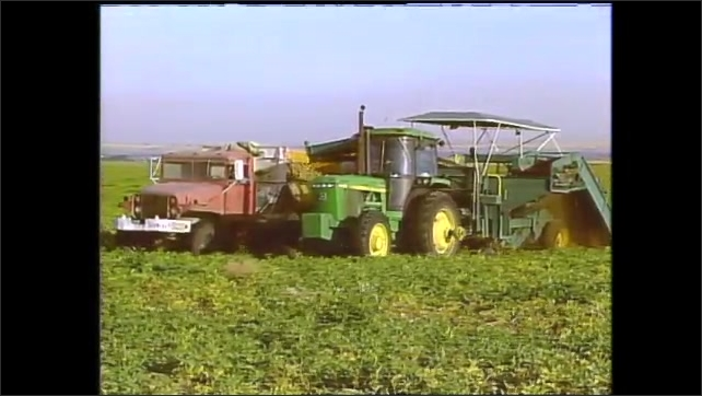1990s: Circular patches of fields. Farmers drive tractors through field and harvest potatoes.
