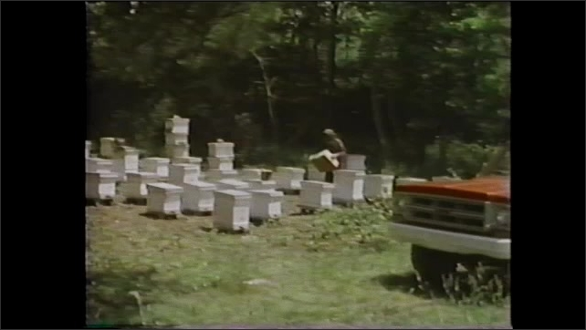 1980s: Man dons hat with net and carries box to hives.