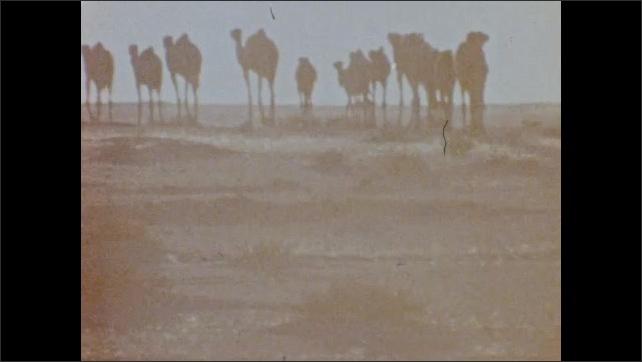 1970s: UNITED STATES: data on Earth. Camels in desert. Nomads in desert.