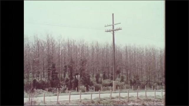 1970s: Damaged leaves of table beet and cabbage plants. Road runs along forest of dead and damaged trees. Damaged leaves of black cherry tree.
