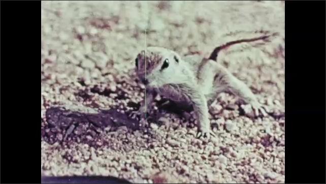 1950s: Man in tall hat cranks film reel. Crow in tree flies away. Birds fly away from water. Chipmunk. Bee in honeycomb.
