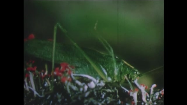 1950s: UNITED STATES: frog hops into water. Green grasshopper in grass. Spider in web.