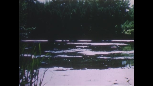 1950s: UNITED STATES: barn owl hides in thicket. View across water. Sunset in sky.