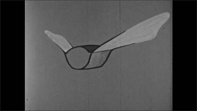 1950s: Illustration demonstrates how insects fly.