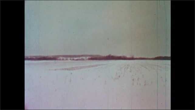 1950s: Bare tree branches. Snow covered field. Tree covered in snow.