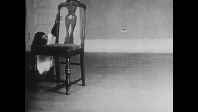 1930s: Child moves chair in room to under string hanging from ceiling with cookie attached to it. Child climbs on chair and grabs cookie. Chimpanzee approaches chair, movies and walks around it.