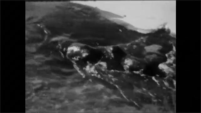 1940s: otters sliding in snow until they arrive at river and start to swim
