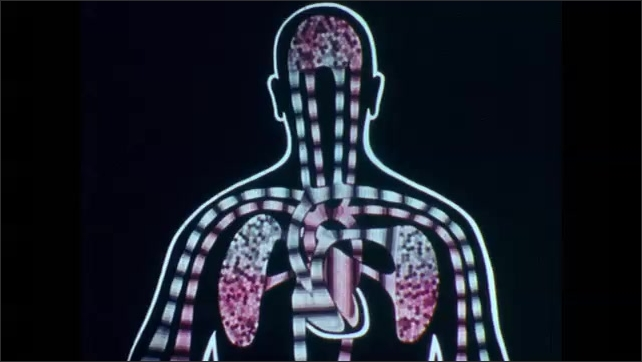 1960s: UNITED STATES: carbon dioxide in blood stream of human. Exhalation from lung. Air circulation in human bloodstream