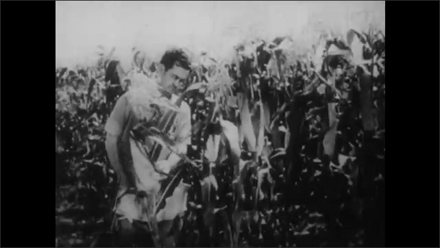 1950s: UNITED STATES: men measures resistance of corn crops to disease. Man covers plant with bag. Lady looks at corn under microscope.