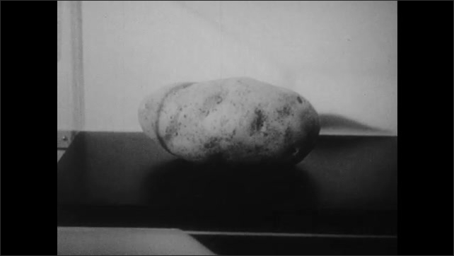 1950s: UNITED STATES: potato in lab. Preservation of potatoes with radiation. Potatoes on conveyor belt