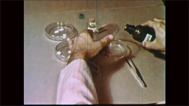 1950s: Petri dish has bacteria growing on right half side. Antiseptic is poured into petri dish. Hand grasps paper soaking in other petri dish and dips it in first dish then places it in third.