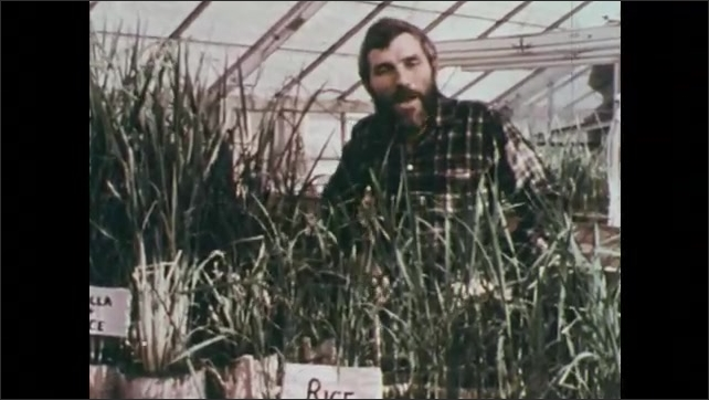 1970s: Ray Valentine speaks and points to Rice + Azolla which is noticeably taller and more vigorous than the pot labelled just Rice. Scientists in lab put liquid in beaker.